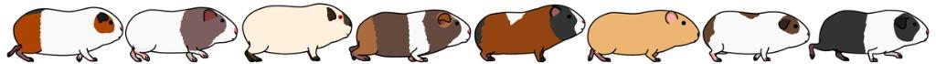 guinea-pigs-in-a-row-set-vector-id1124589349_istock_bezahlt_Ausschnitt